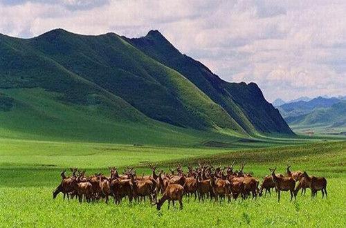我国将建羊草种子繁殖基地超30万亩